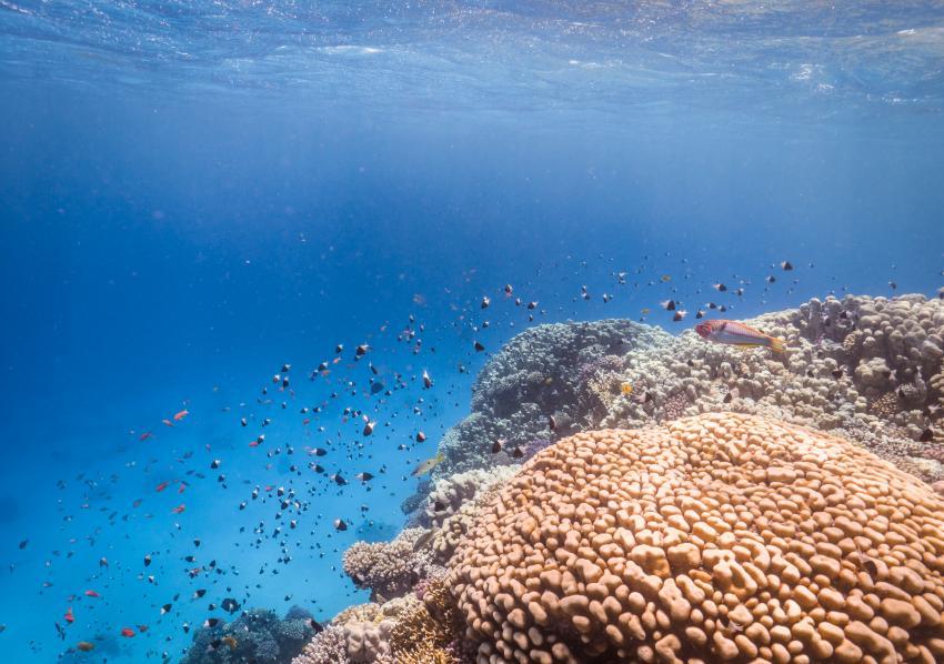 Scuba World Divers Soma Bay_3, Tauchen in der Soma Bay, Scuba World Divers Soma Bay, Caribbean World Resort, Ägypten, Safaga