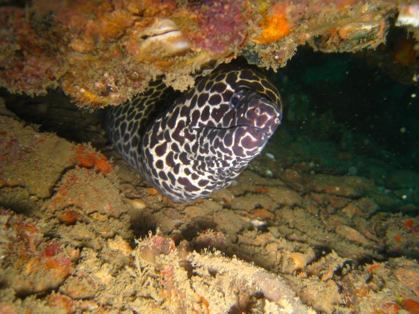 Wetzone Divers März 2011