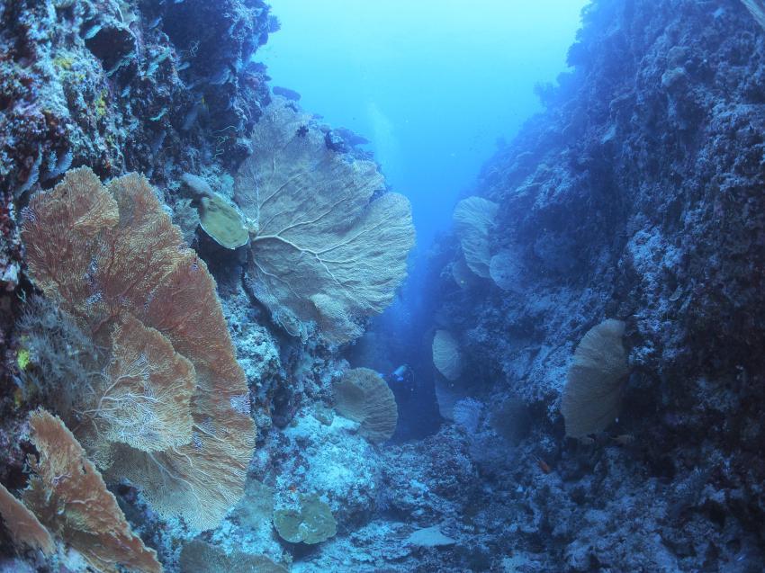 Canon, Fächerkorallen, Euro-Divers LUX* South Ari Atoll, Malediven