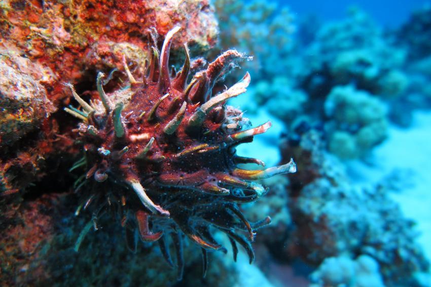Soma Bay_5, Tauchen Ägypten Soma Bay, Scuba World Divers Soma Bay, Caribbean World Resort, Ägypten, Safaga