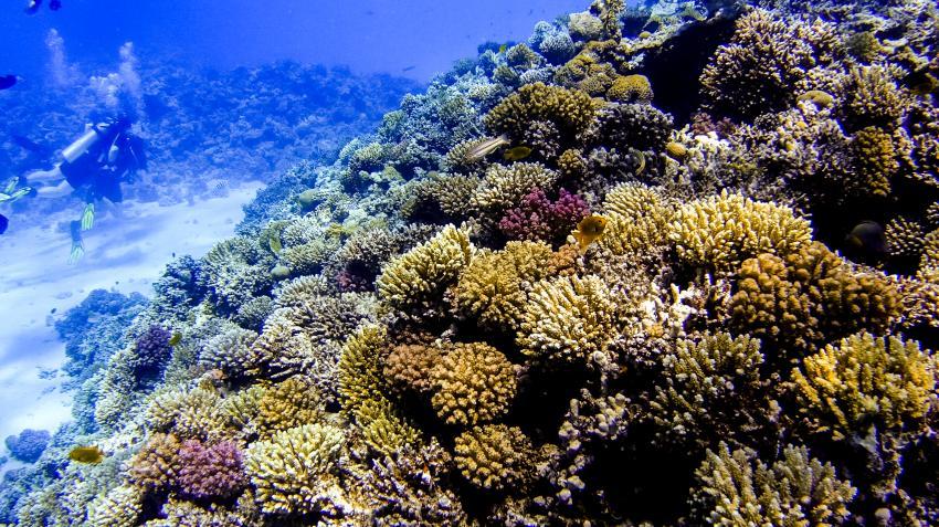 Scuba_World_Divers_Makadi_Bay_7, Tauchen in Makadi Bay, Scuba World Divers Makadi Bay, Ägypten, Hurghada