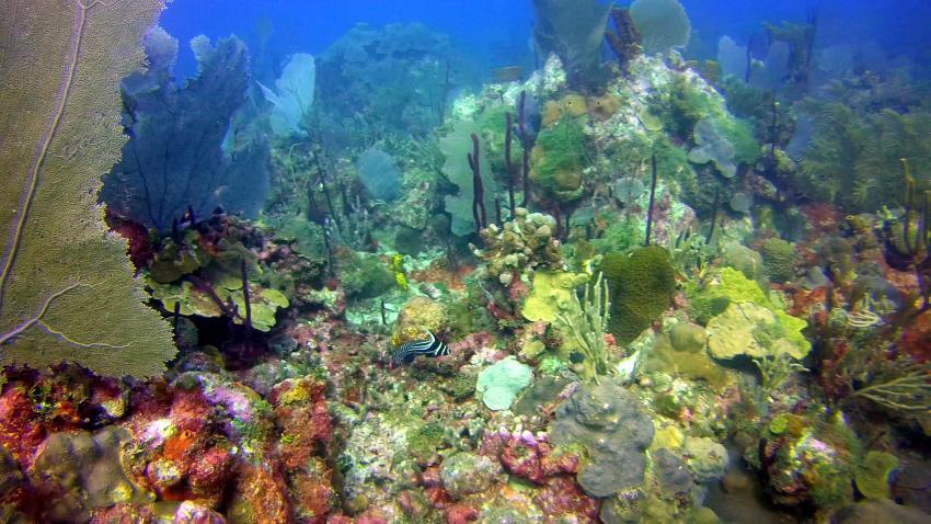 Bayahibe Natur Park 1, Ultra Marine Divers, Punta Cana, Dominikanische Republik, riff, bunt