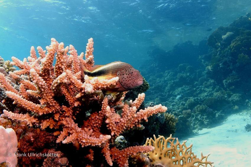 Marsa Alam & Elphinstone, Marsa Alarm,Ägypten,Korallenwächter (Marsa Egla)