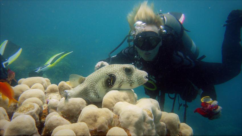 Scuba_World_Divers_Marsa_Alam_3, Tauchen in Marsa Alam, Scuba World Divers Marsa Alam, Lagoon View Resort, Ägypten, El Quseir bis Port Ghalib