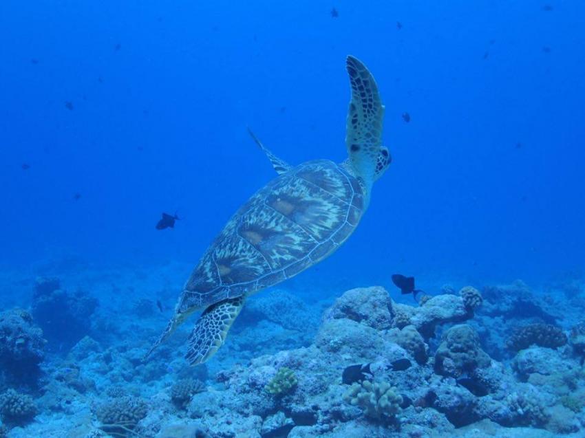 Carp Island Resort, Palau
