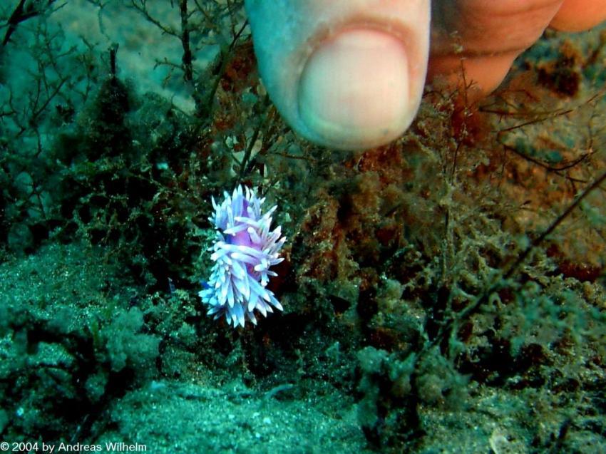 Fuerteventura - Chupadero Nord, Fuerteventura - Chupadero Nord,Spanien