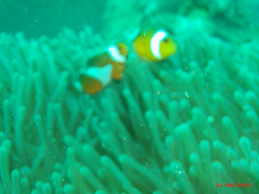 PhiPhi mit BiTZi, Phi Phi Islands,Thailand