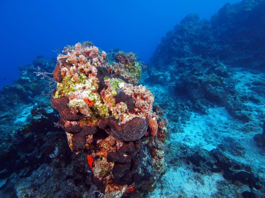 Faszination Mittelmeer, Südliche Ägäis - Symi - Halbinsel Datca,Türkei