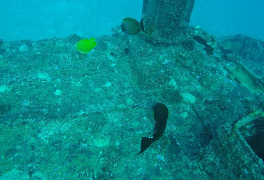 Wracktauchen (Stella Maru), Dive Spirit, Mauritius