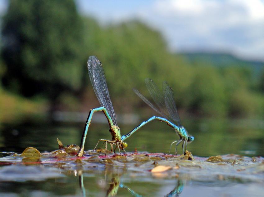 Kleine Welt ganz groß im Baggersee