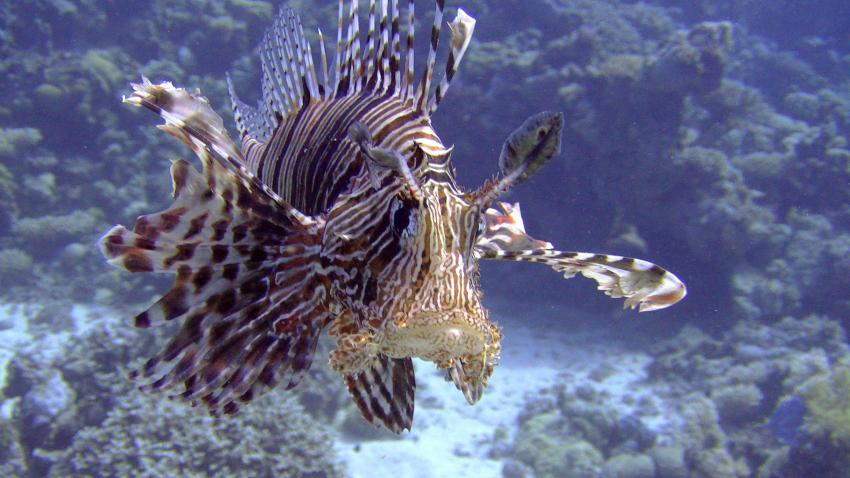 Anfängerfotos, Umm Hal Hal (Middle Reef),Safaga,Ägypten
