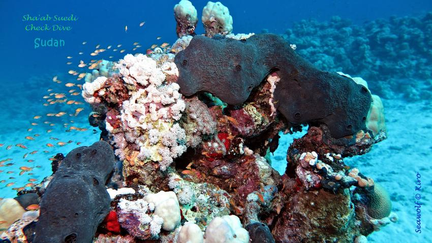 Sha'ab Suedi, Sudan, Seawolf Diving Safari, Riffkarte, Suedi Suadi, Sha'ab Suedi Ostseite, Sudan