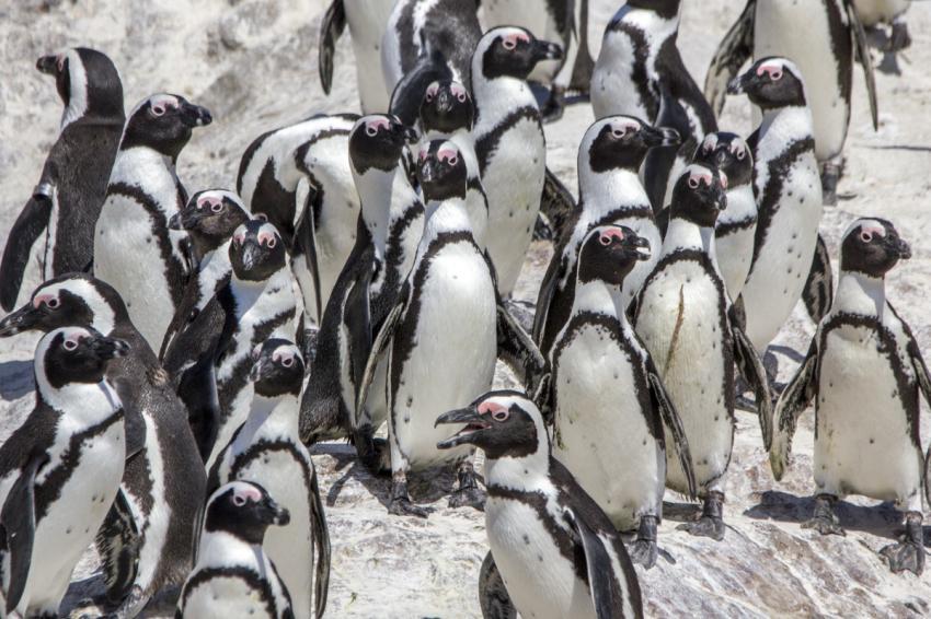 Dive Expert-Tours ,   Südafrika, Südafrika