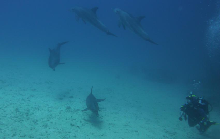 4 Delfine und ich