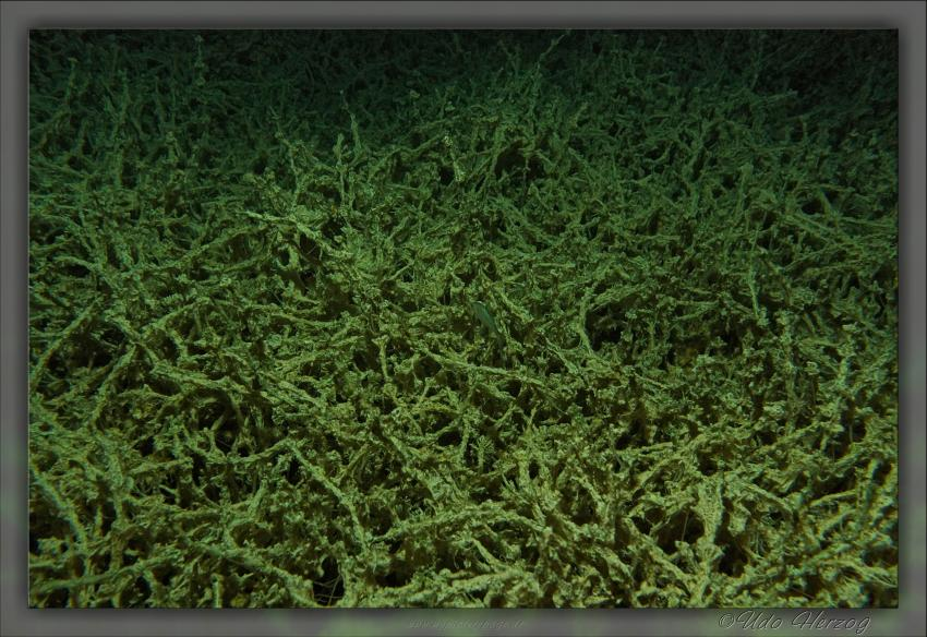 Nachttauchen in der Ruderregattastrecke - Hechte, Aal, Rotaugen, Barsche usw., Regatta-Anlage München/Oberschleißheim,Bayern,Deutschland