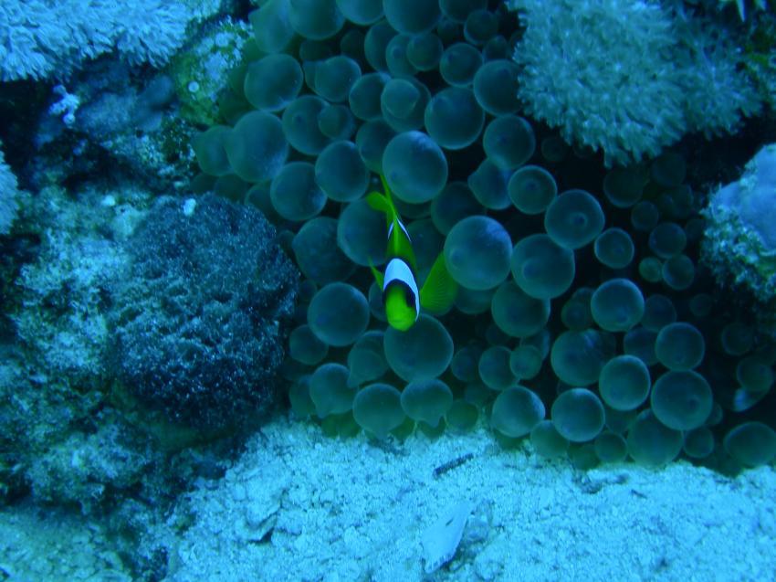 Brayka Bay House Reef, Brayka Bay,Ägypten