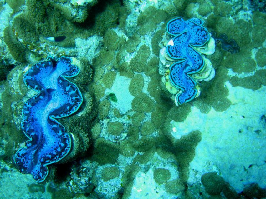 Marsa Alam - Hausriff Extra Divers