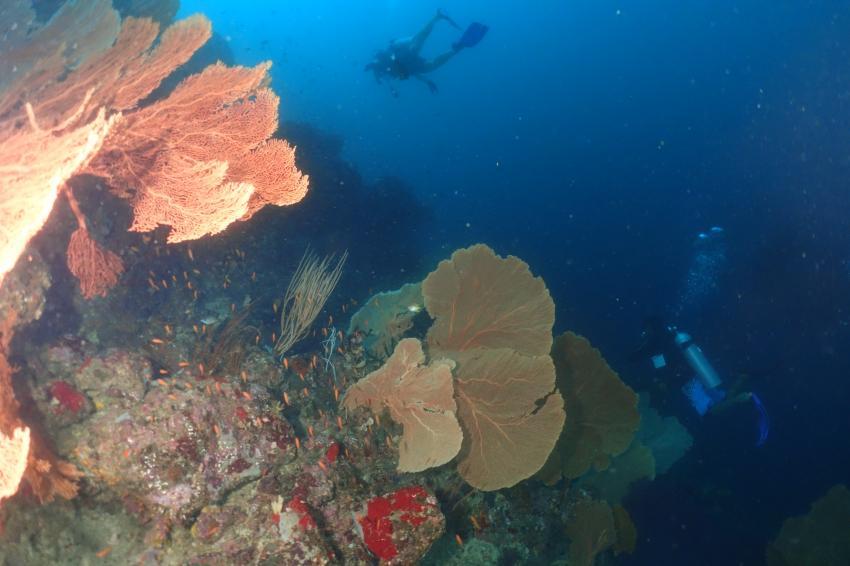 Canyon, Pulau Weh, Lumba Lumba, Canyon, Lumba Lumba Diving Center, Pulau Weh, Sumatra, Indonesien, Allgemein