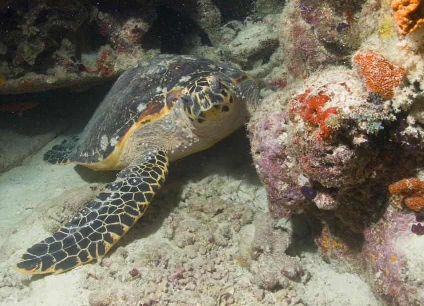 SY Siren Tauchsafari südliche Atolle, Tauchsafari südliche Atolle,Malediven