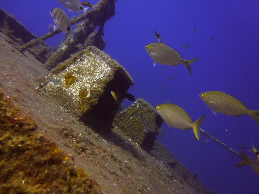 Tabeiba-wreck, Diveria Diving Center, Alcala Teneriffa, Spanien, Kanarische Inseln