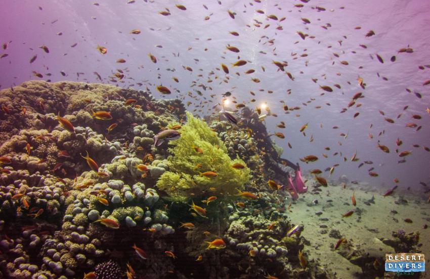 Dahab, an underwater photographers paradise, dahab, Desert Divers, Dahab, Ägypten, Sinai-Nord ab Dahab