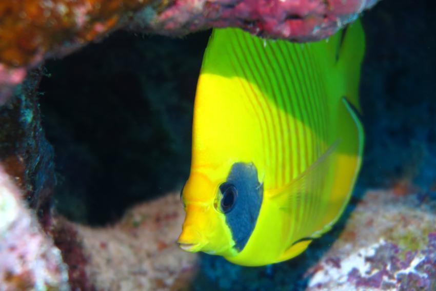 Scuba World Divers Soma Bay_11, Tauchen Ägypten Soma Bay, Scuba World Divers Soma Bay, Caribbean World Resort, Ägypten, Safaga