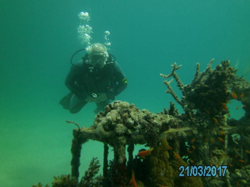 künstliches Riff im Hausriff, Scuba World Divers Makadi Bay , Ägypten, Hurghada