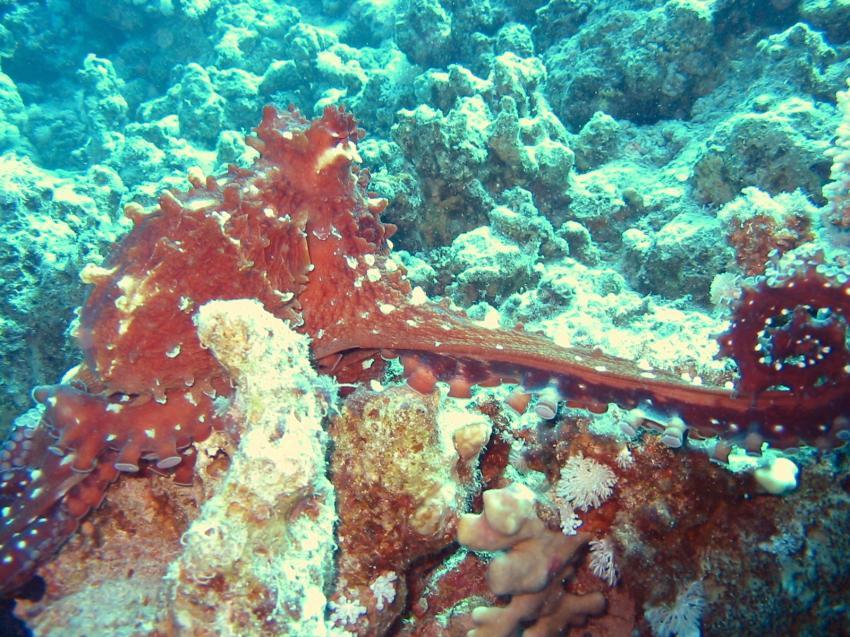 Sharm el Sheikh - Sharks Bay, Shark Bay - Sharm el Sheikh,Ägypten