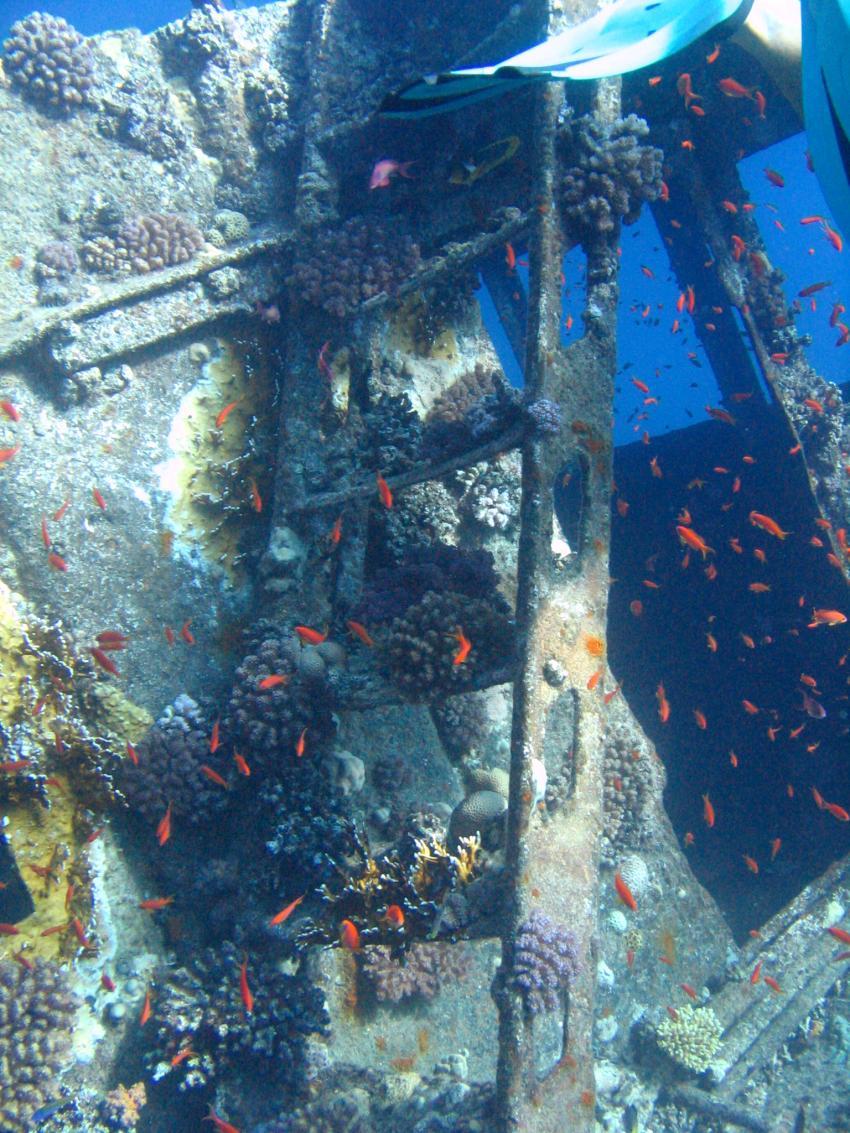 Wrack der Ghiannis D, Wrack der Ghiannis D.,Ägypten,Wrack,Leiter,Korallen