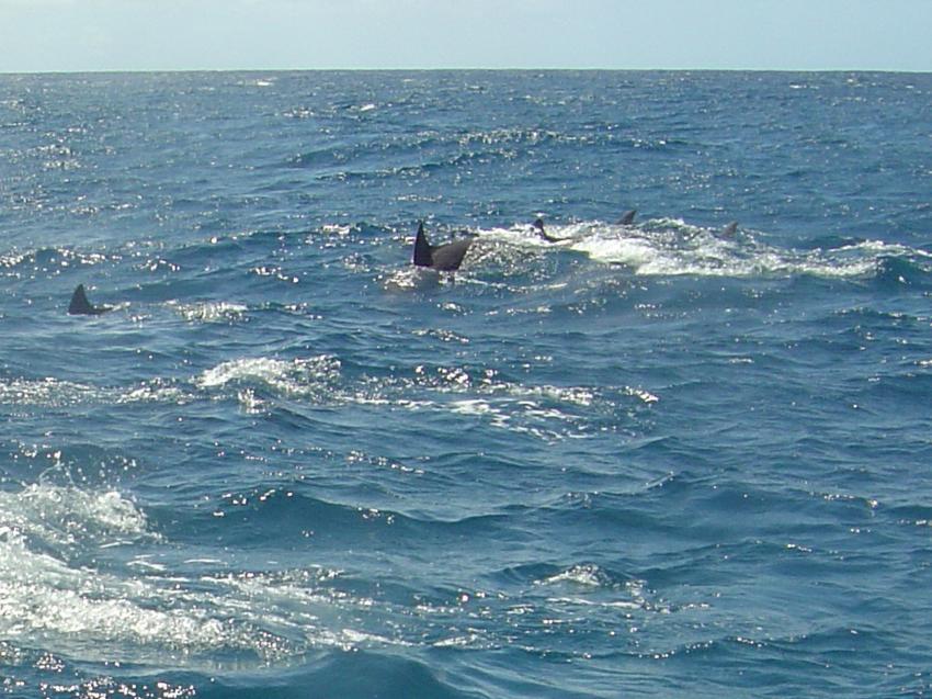Le Morne  Easy Dive Center