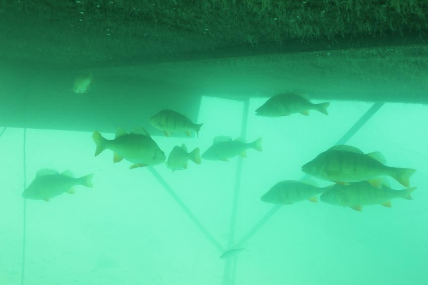 Weissensee Diving.de Dive World, Weissensee Ostufer,Einstieg Dive World,Österreich