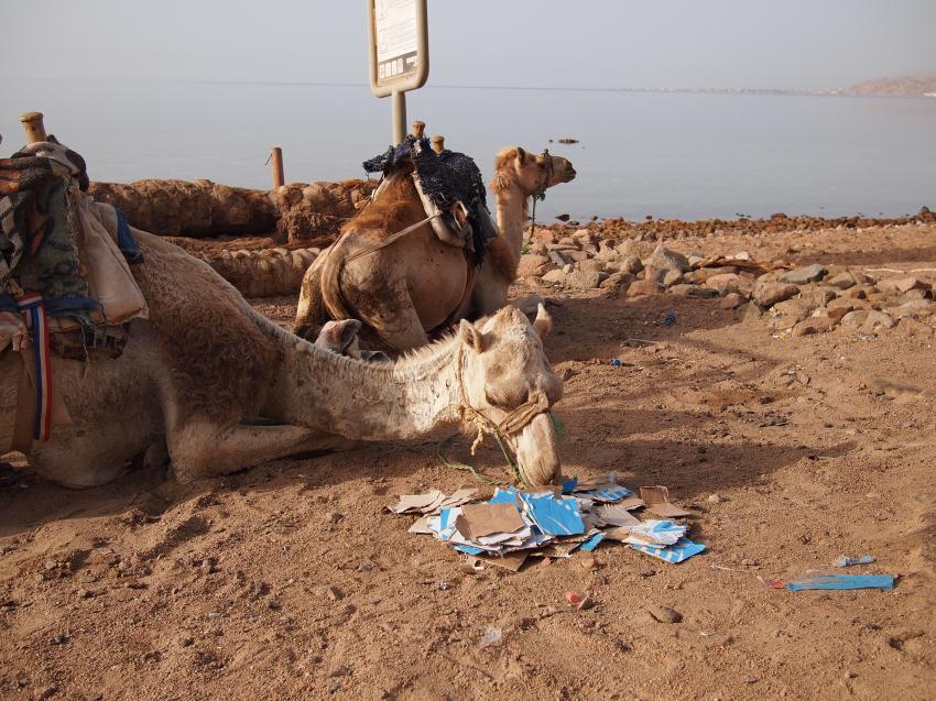 rund um Dahab II, Ras Abu Galum - Dahab,Dahab - allgemein,Ägypten