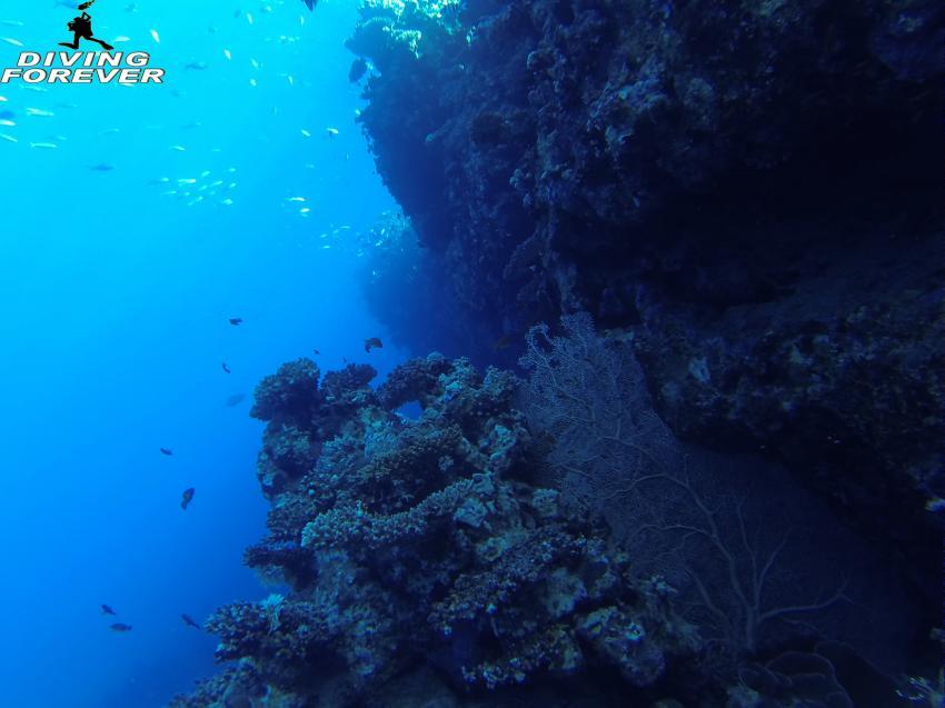 Tauchschule Hurghada, Tauchschule Hurghada, Diving Forever Hurghada, Ägypten, Hurghada
