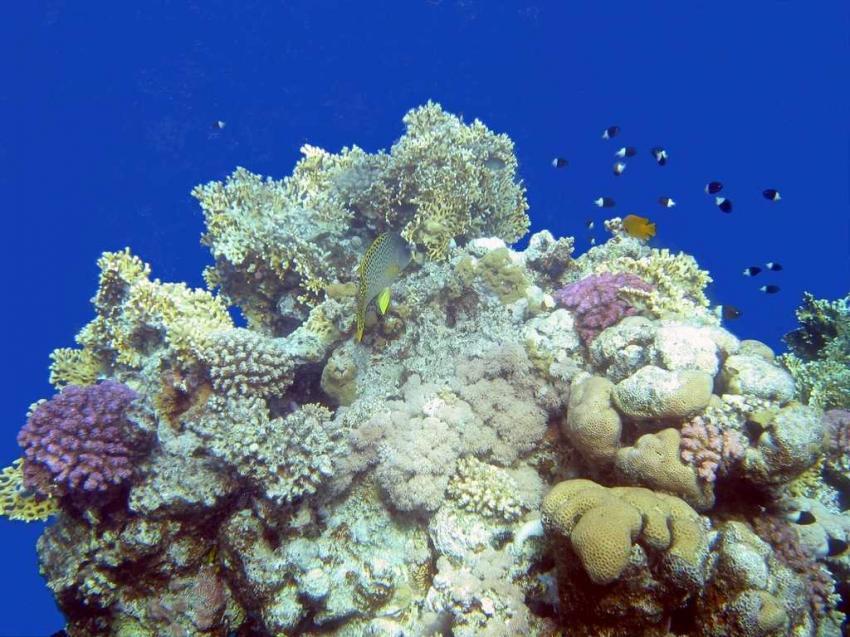 Shark Bay, Shark Bay - Sharm el Sheikh,Ägypten