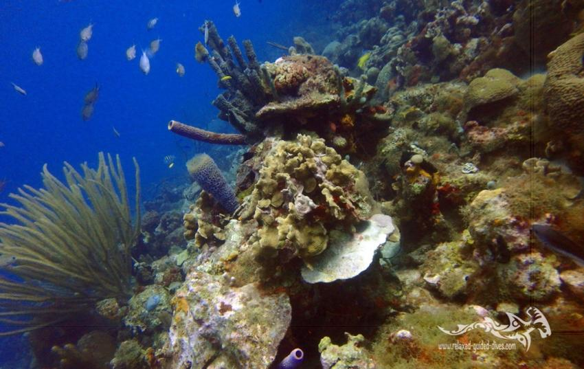 Korallen, Relaxed Guided Dives, Niederländische Antillen, Curaçao