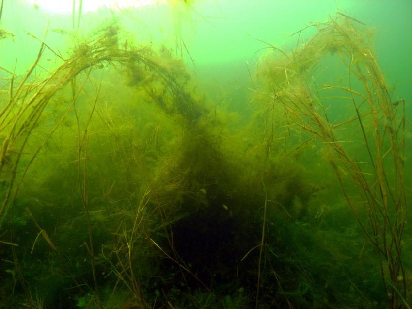 Jersleber See, Jersleber See,bei Magdeburg,Sachsen-Anhalt,Deutschland,Sachsen Anhalt