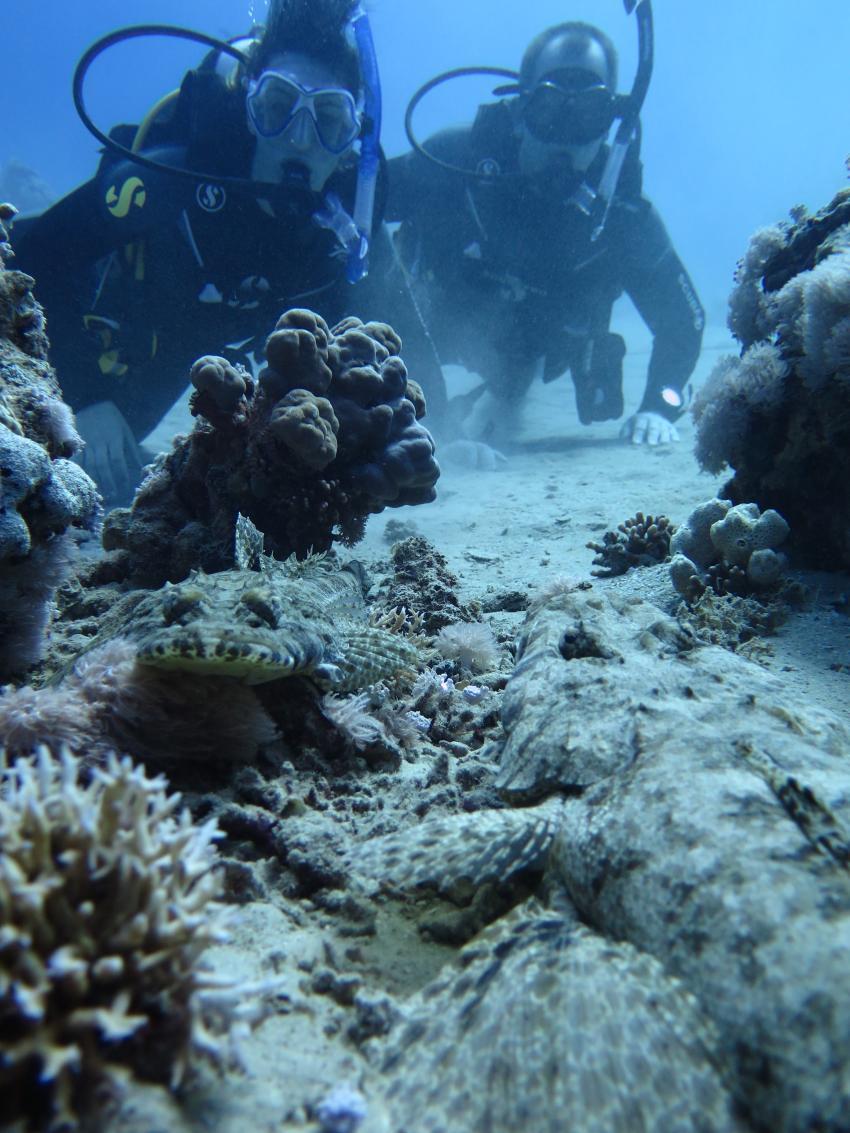 Hausriff, ScubaWorld Divers Makadi Bay Madinat, Ägypten, Safaga