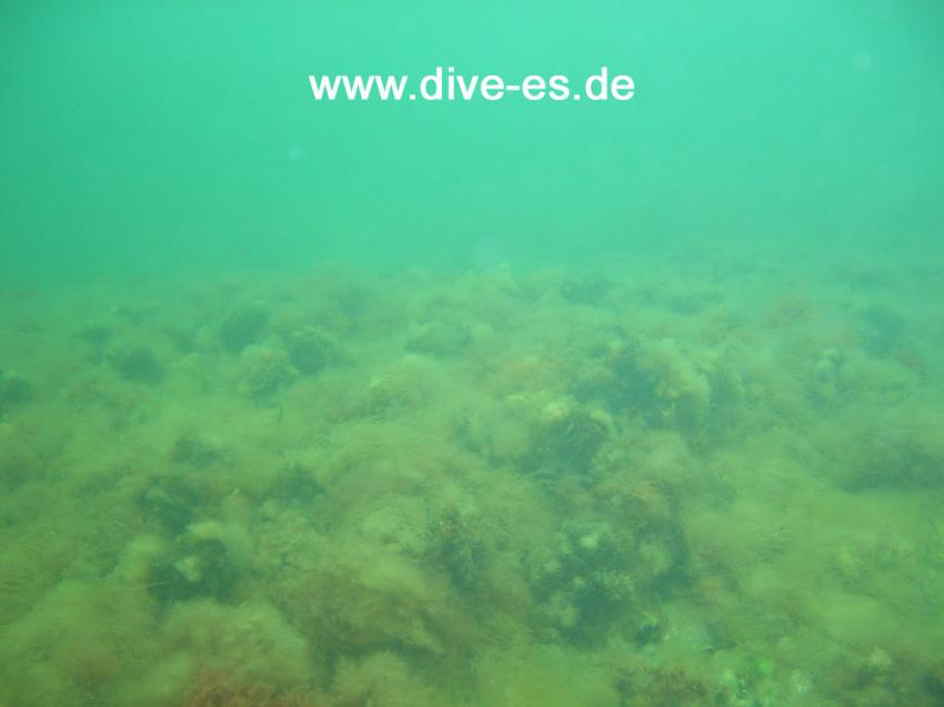 Ostsee / Tauchplatz Basis Katharinenhof, Ostsee allgemein,Schleswig-Holstein,Deutschland,Schleswig Holstein