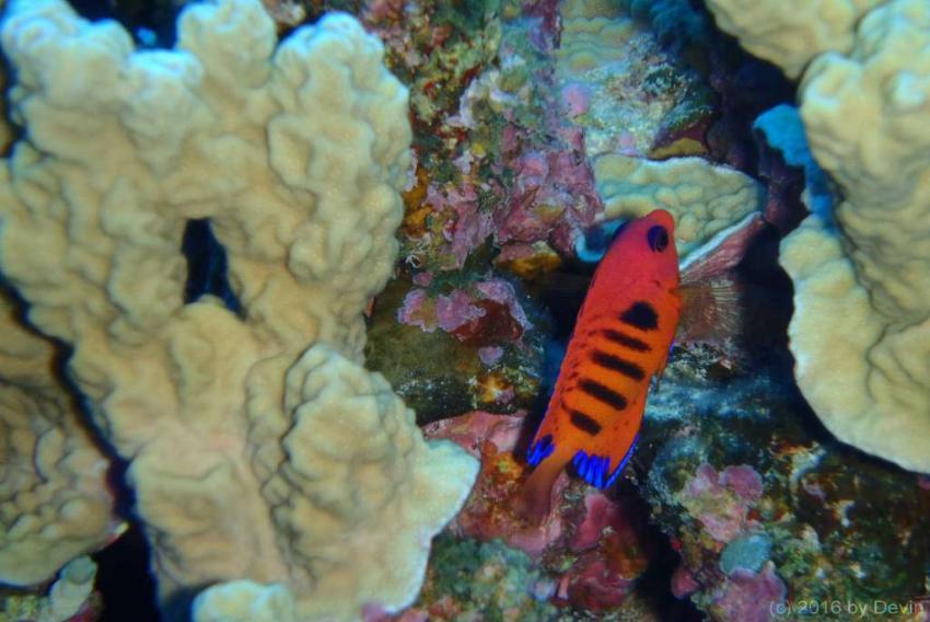 Rarotonga, Cook Islands 2016, Rarotonga, Cook Islands 2016, The Dive Centre, Rarotonga, Cookinseln