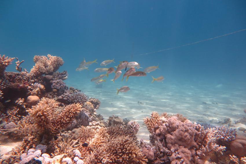 Scuba World Divers_Makadi Bay_Hausriff_7, Tauchen in der Makadi Bay, Scuba World Divers Makadi Bay, Ägypten, Hurghada