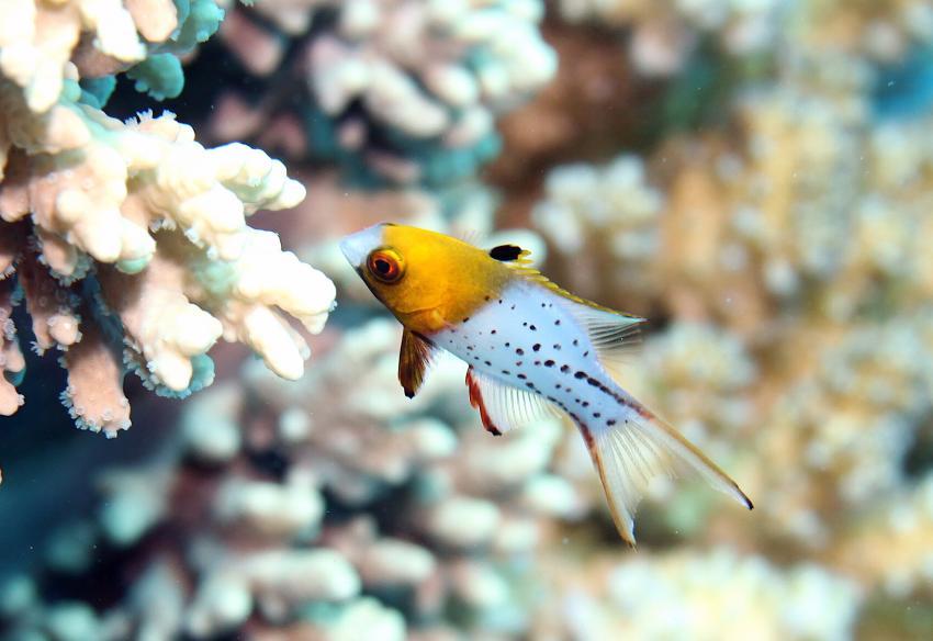 Auge um Auge, Annette & Robby RedSea-Divers,Hurghada,Ägypten
