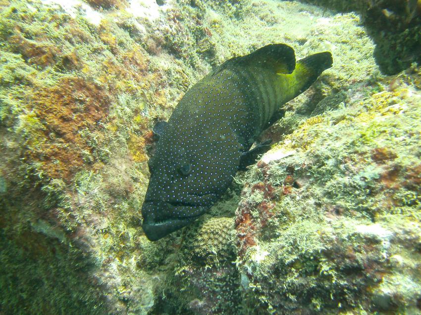 auch entdeckt, LSR Diving Passikuda, Sri Lanka
