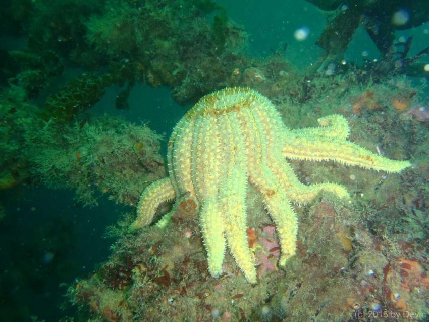 Wrack der MV Mikhail Lermontov, Go Dive Picton, New Zealand, Wrack der MV Mikhail Lermontov, Go Dive Picton, New Zealand, Go Dive Picton (und Lermontov Lodge), Neuseeland