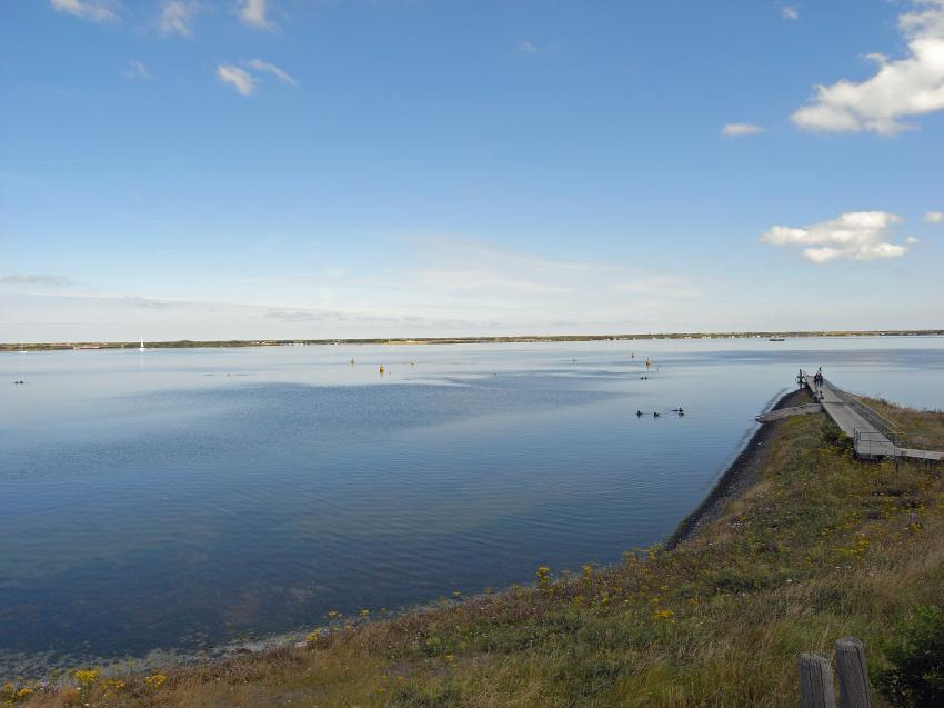 TP:Kabbelaarsrif, Scharendijke,Grevelinger Meer,Niederlande
