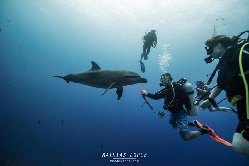 In Rangiroa kann man mit Delfinen Tauchen, Delfine, Tauchen, Rangiroa Diving Center (vorm. Paradive), Französisch-Polynesien