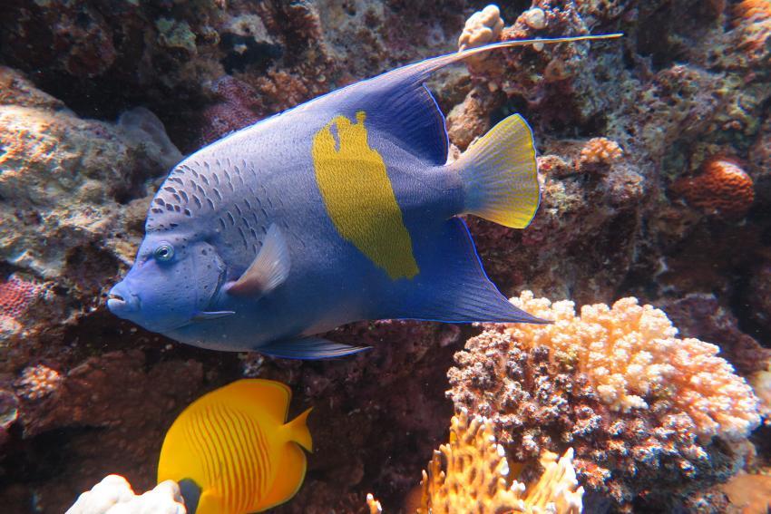 Scuba World Divers Soma Bay_5, Tauchen Ägypten Soma Bay Safaga, Scuba World Divers Soma Bay, Mövenpick Resort (ex Caribbean World Resort), Ägypten, Safaga