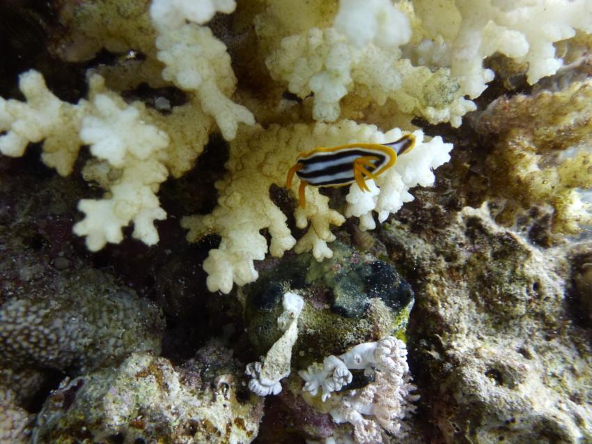 Scuba World Divers Makadi Bay , Ägypten, Hurghada