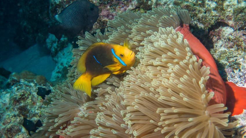Bora Bora 05.2013, Bora Bora,Französisch-Polynesien