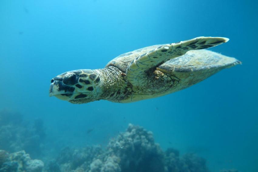 SWDS5, Tauchen in El Quseir, Scuba World Divers El Quseir, SENTIDO Oriental Dream Resort, Ägypten, El Quseir bis Port Ghalib