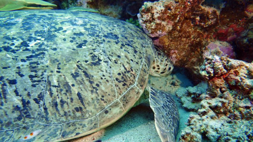 Extra Divers - Ghalib, Port Ghalib, Ägypten, El Quseir bis Port Ghalib